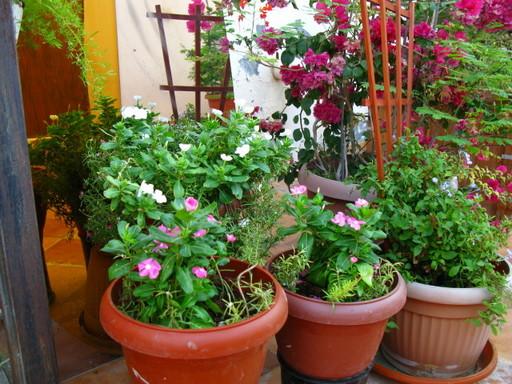 20111029 garden flower 018.jpg