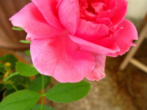20111102 garden 012.jpg