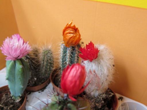 20120122 flower shop 018.jpg