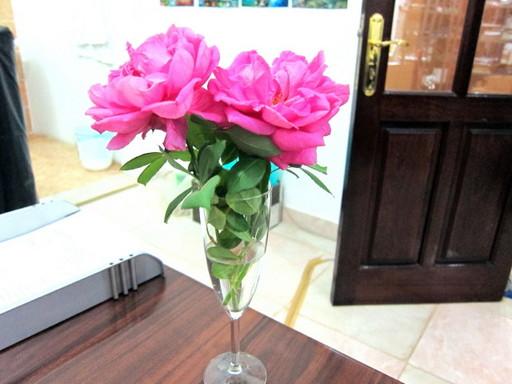 20120131 rose 011.jpg
