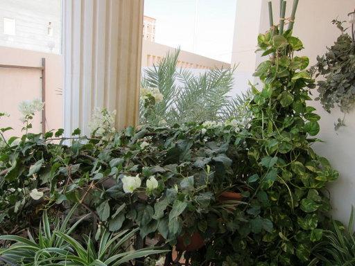 20121202 office flower 003.jpg