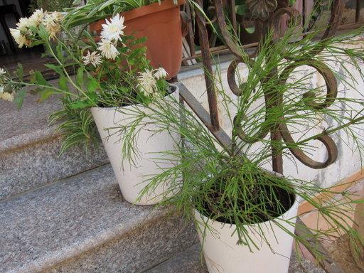 20121202 office flower 016.jpg