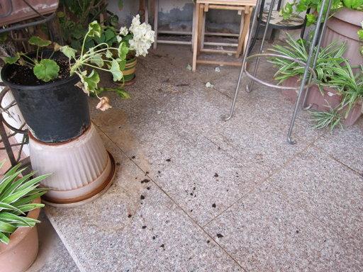 20121202 office flower 024.jpg