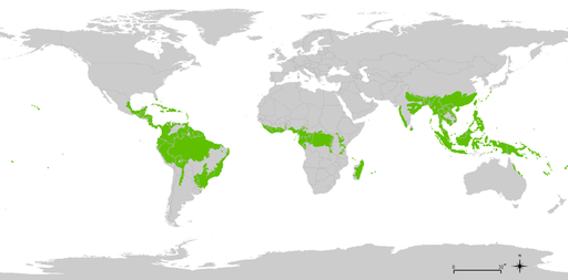800px-tropical_wet_forests.png