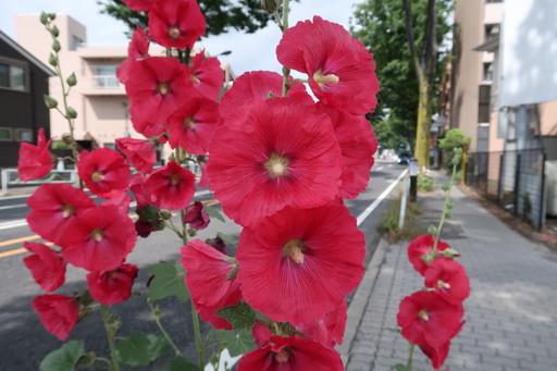 IMG_8719_1.JPG