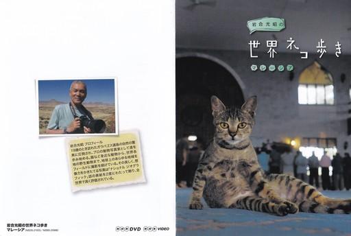 cats 2nd.jpg