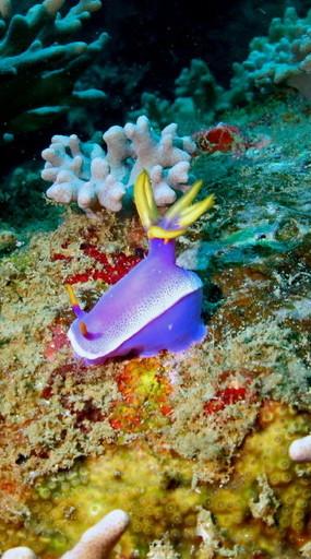 sea slug.jpg