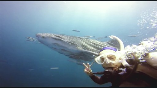 whale shark redang sato arranged_Moment.jpg